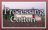 Processing Cotton